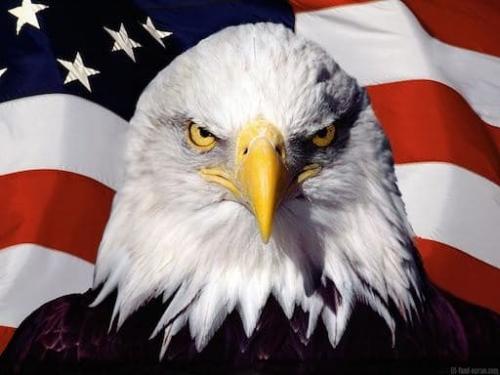 aigle-americain.jpg
