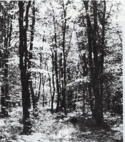 Les dieux vivent dans les forêts.jpeg