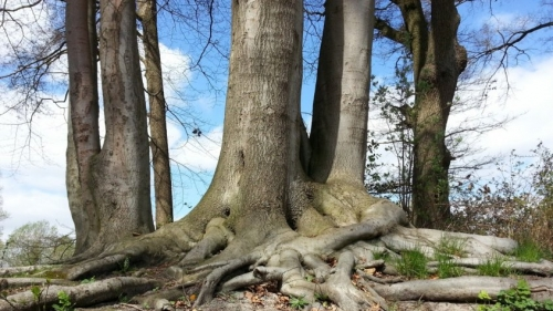 tree_root_forest_nature_strains_trees_beech-1128650-845x475.jpg